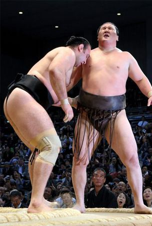 Surprise upsets for yokozuna Hakuho, Harumafuji on Day 11