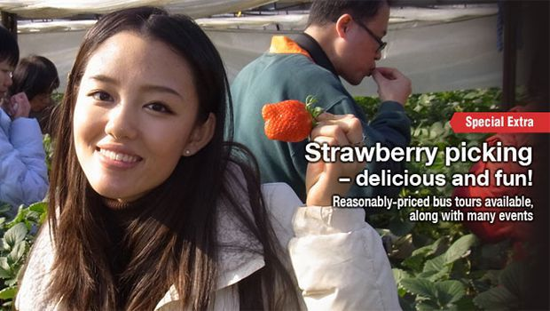 Strawberry picking – delicious and fun!