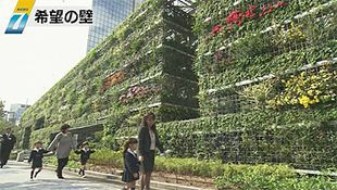 Huge green wall unveiled in Osaka