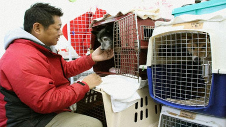 70 animals remain in shelter in Sendai