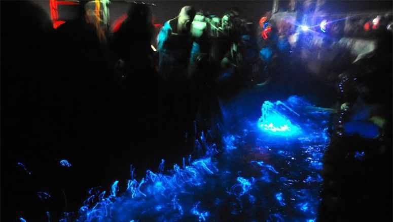 Ocean glows blue as Toyama tours start for firefly squid fishing