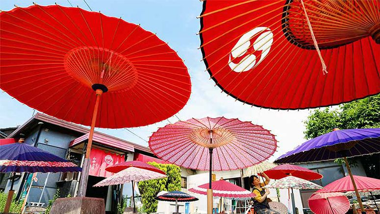 PHOTO: Traditional Japanese umbrellas are dried in the sun before the rains come