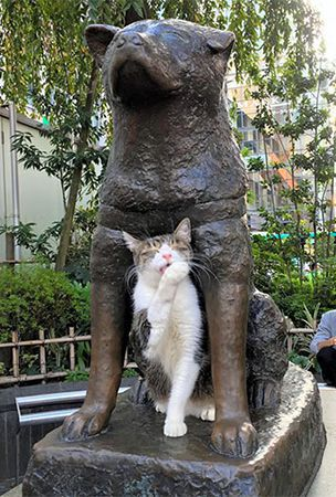 Hachiko no longer alone, but crowd-getter also draws ...