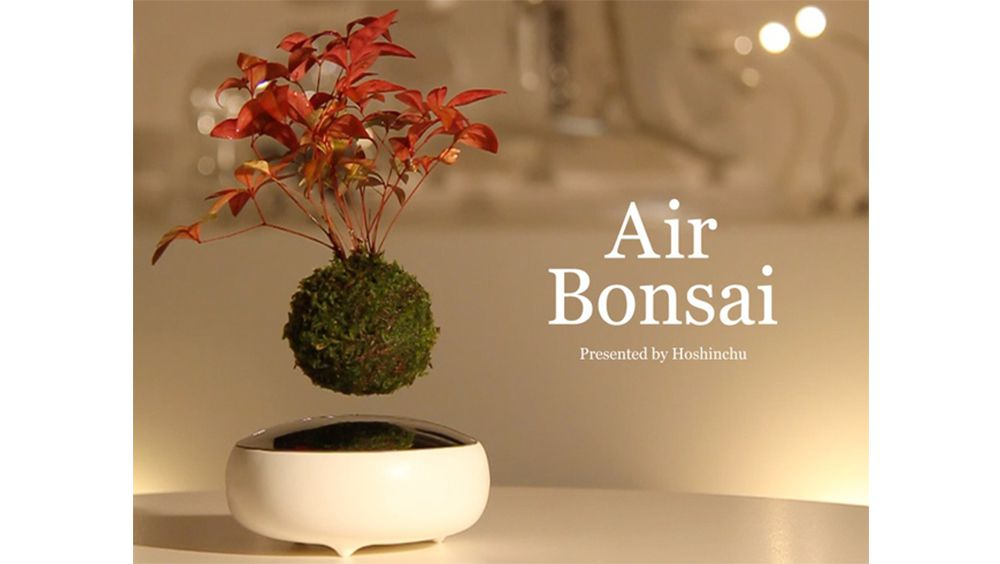 Air Bonsai Takes Zen Gardening To Hi Tech Levels Technology Japan Bullet
