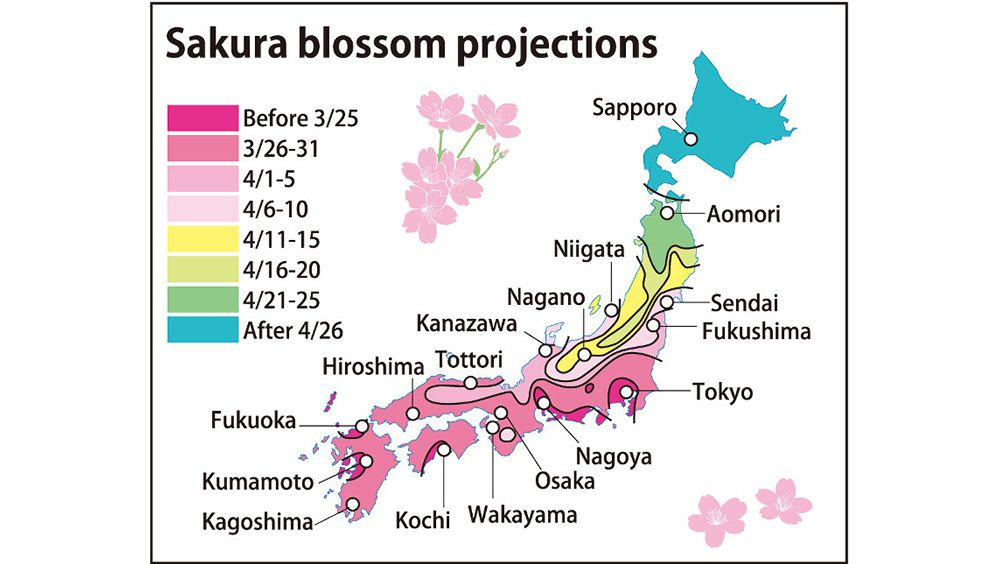 2016 Cherry Blossom Season Projected For Early March 21 Start News