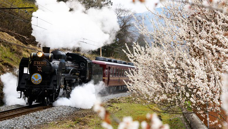 Steam engine heralds coming of springtime in western Saitama
