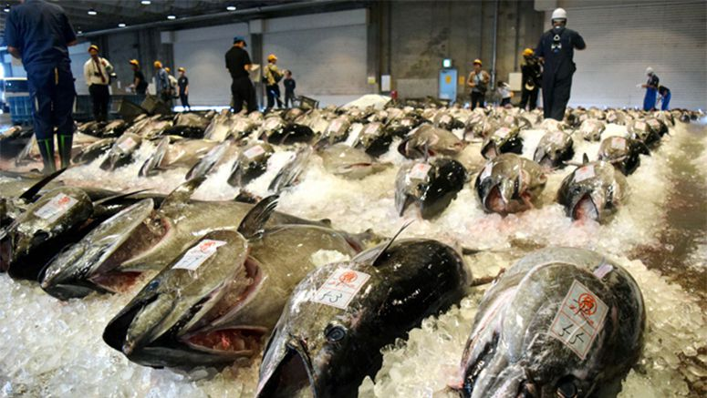 Year's 1st auction of bluefin tuna held at famed Tottori port