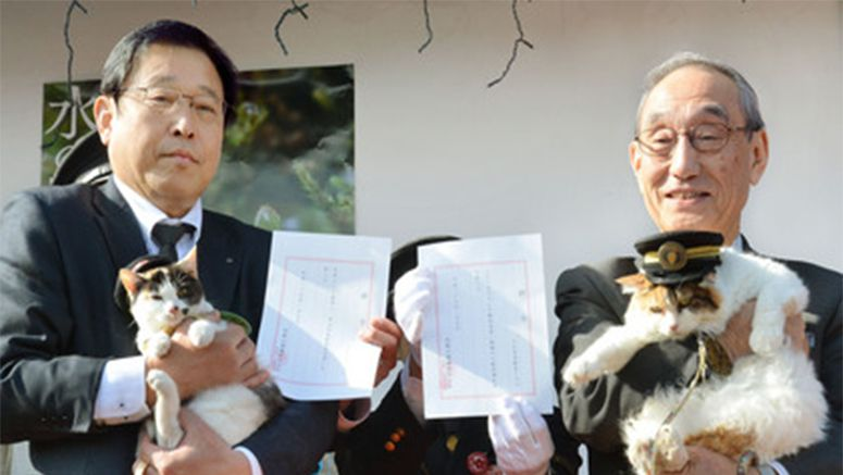 Japanese railway commemorates 10th anniversary of cat stationmaster