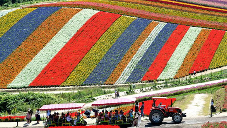 Colorful array of stripes of flowers thrill the eye in Hokkaido