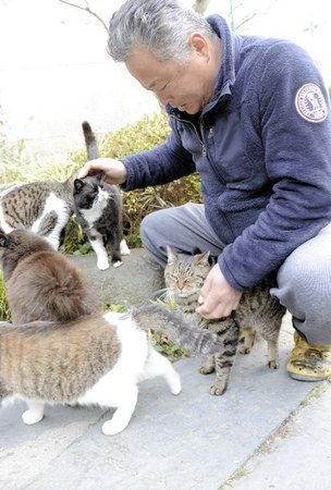 Tashirojima, Japan is home to some 200 cats who live alongside human residents