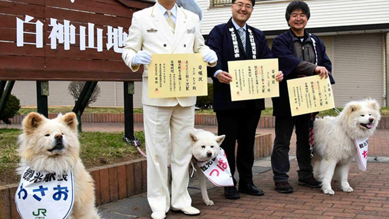 Beloved 'ugly' Akita Inu Wasao 'station master' for another year