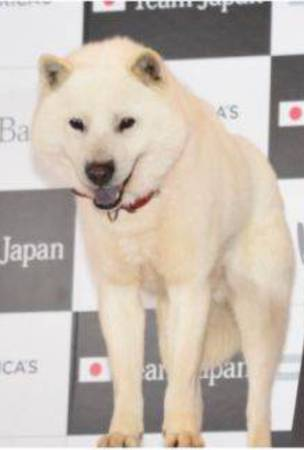 Softbank CM dog Kai-kun passes away