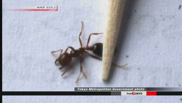 Japan officials confirm measures against fire ants