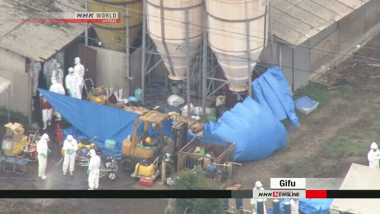 Hogs culled as swine fever confirmed in Gifu