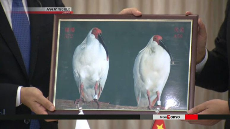 Crested ibises from China arrive in Sado