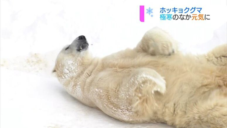 Cold-climate creatures in their element in Sapporo