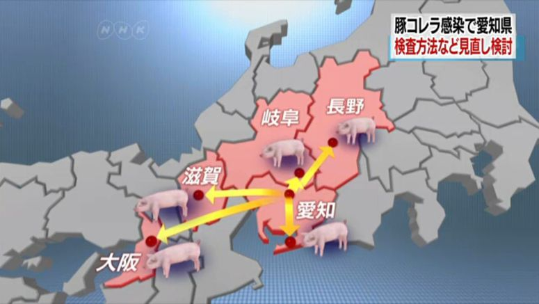 Aichi to consider revising swine fever checks