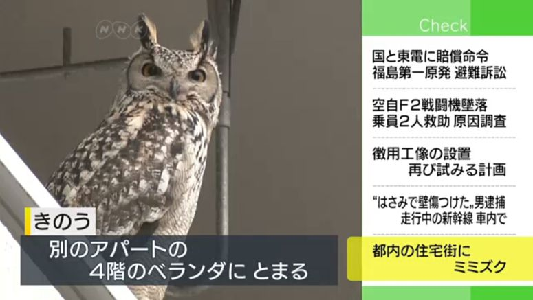 Horned owl spotted in Tokyo residential areas