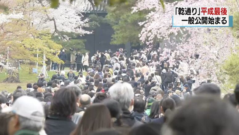 Palace grounds open for cherry blossom viewing