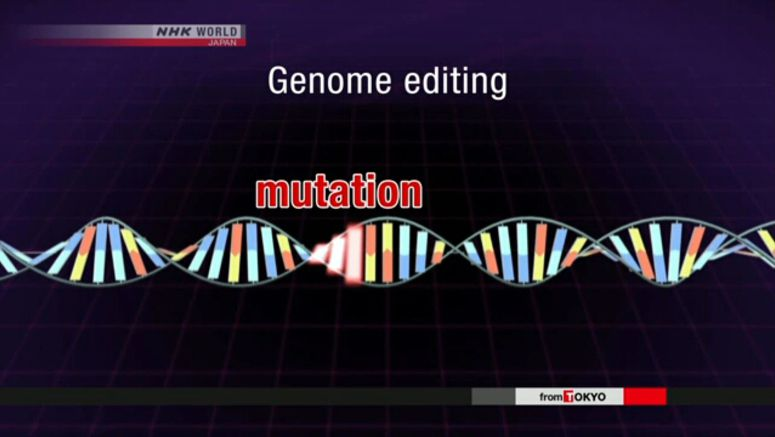 Rules created for genome-edited food