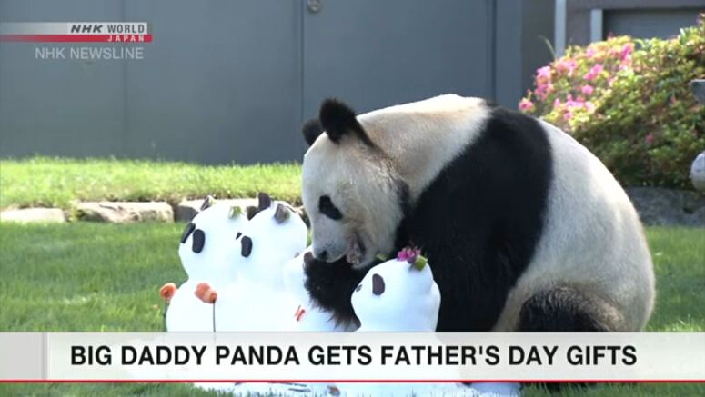 Father's Day gifts for panda in Wakayama zoo