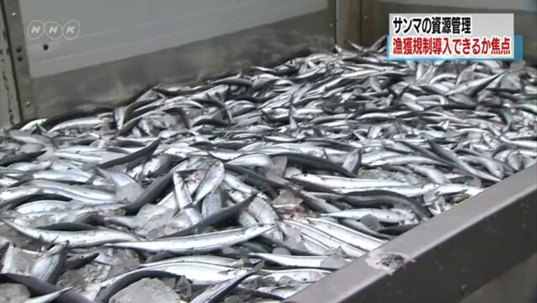 Pacific economies debate saury fishing