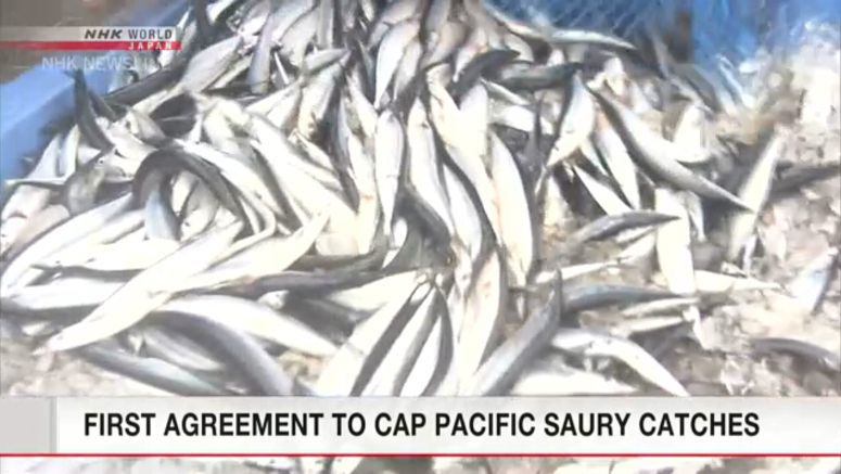First cap set on Pacific saury catches