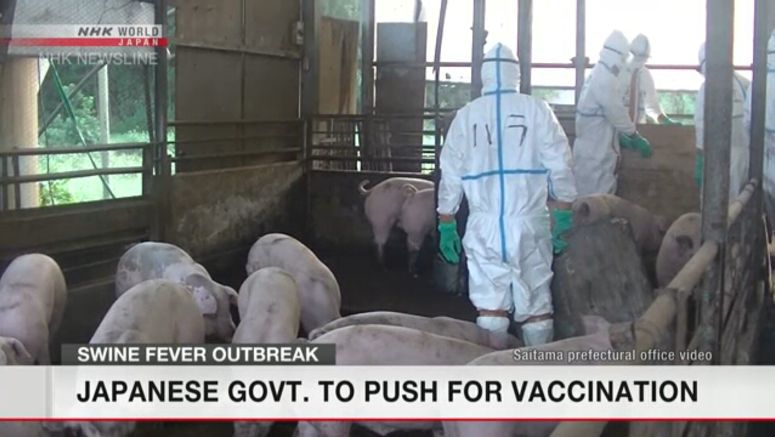 Govt. to vaccinate pigs to combat swine fever