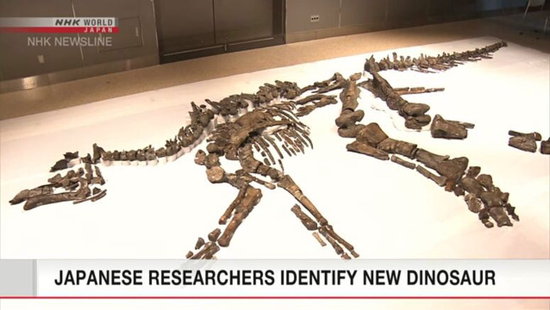 Japan's largest dinosaur given scientific name