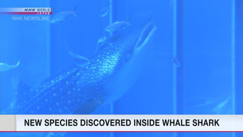 New species found in mouth of whale shark