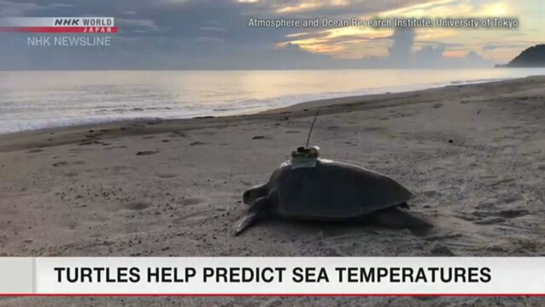 Forecasting sea temperatures with help of turtles