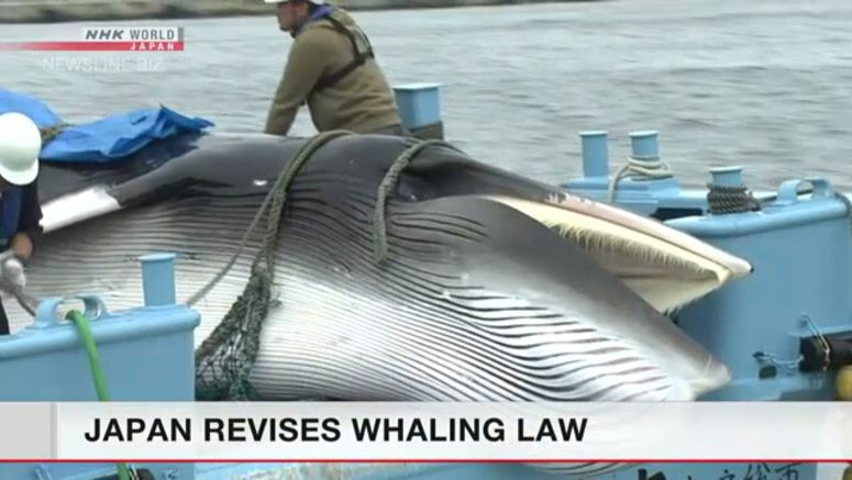 Japan's Diet approves sustainable whaling law