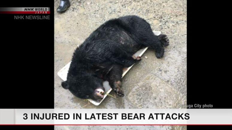 3 injured in bear attacks in Fukui