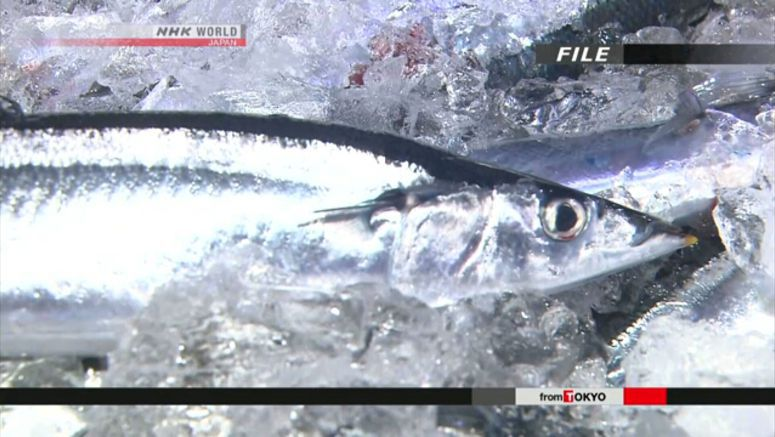 Conference agrees to reduce Pacific saury catch