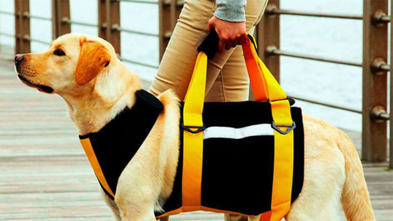 Tombow walking harness offers a leg up to elderly dogs