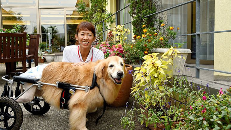 Wheelchair-bound treatment canine lifts spirits of terminal tumor patients