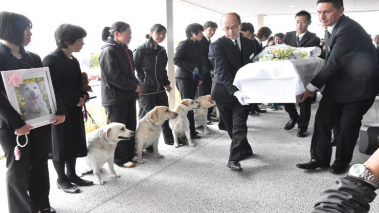 Farewell function held for cherished late police pooch 'Kinako'