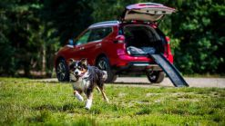 Nissan X-Trail Becomes Dog-Friendly With New 'Paw Pack'