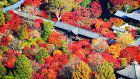 Large crowd gathers at Kyoto temple to take in autumn colors