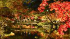 Photo: Autumn foliage in Japan's Kyoto
