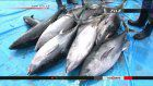 Japan tightens tuna fishing controls