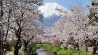 6 things you should know about hanami (cherry blossoms viewing)