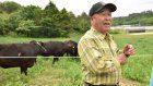 Cattle return to graze in Fukushima village for first time since nuke plant meltdowns