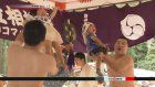Babies compete in 'crying sumo' contest