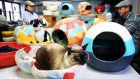 Cats find their purr-fect home in houses made of 'washi' paper