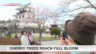 Cherry blossom blooming in northeast Japan