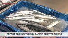 Report warns of depletion of Pacific saury stocks