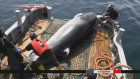 Whale meat from commercial hunt goes on sale