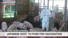 Japan to start vaccinations against swine fever