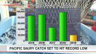 Japan's pacific saury catch could hit record low